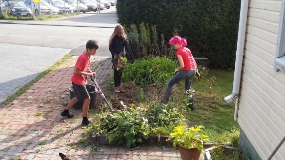 Lapsosten kanssa tehdään järkystä kukkapenkistä tuottavaa kasvimaata.