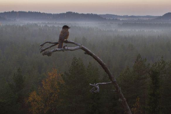 Kuva: http://www.koulukino.fi/?id=1234