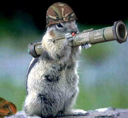 187-funny-animals-with-guns-pictures-2011--wallpaper-499x459