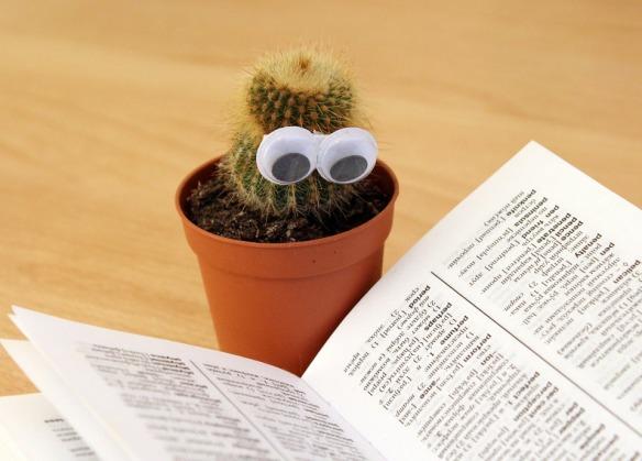cactus-1059633_960_720